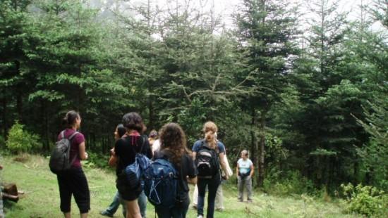 Santuario del Pinabete